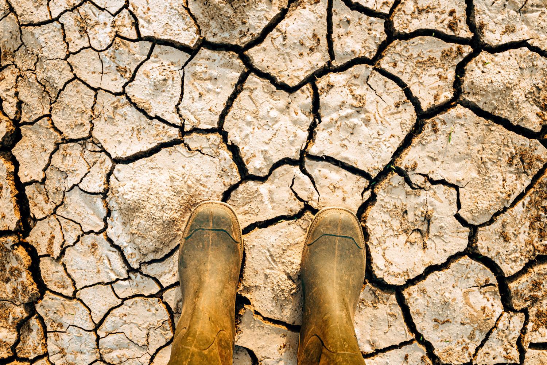 Reporte Unidos en la Ciencia: el cambio climático no se ha detenido por COVID-19