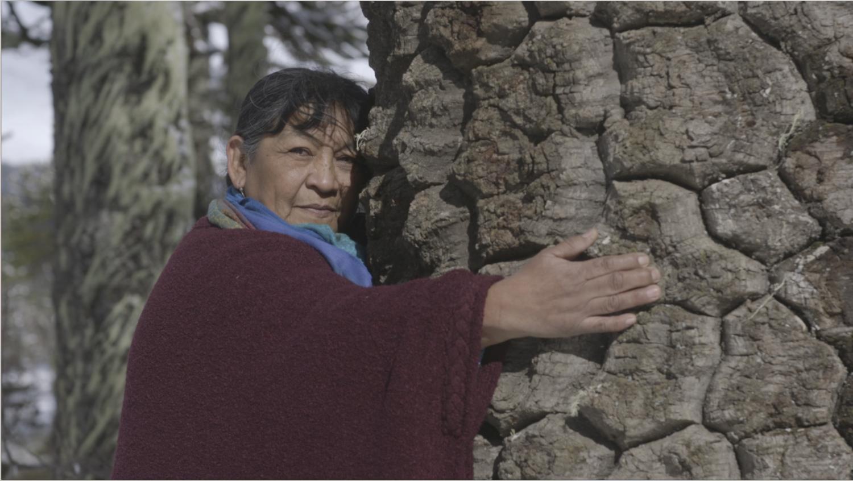 Eurocinema por el Clima: conoce los imperdibles documentales que serán parte del festival de cine sobre cambio climático